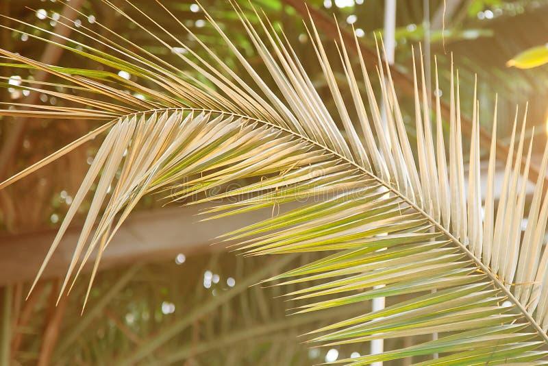 Feuille de paume au soleil Modèle de plante tropicale d'été photo libre de droits