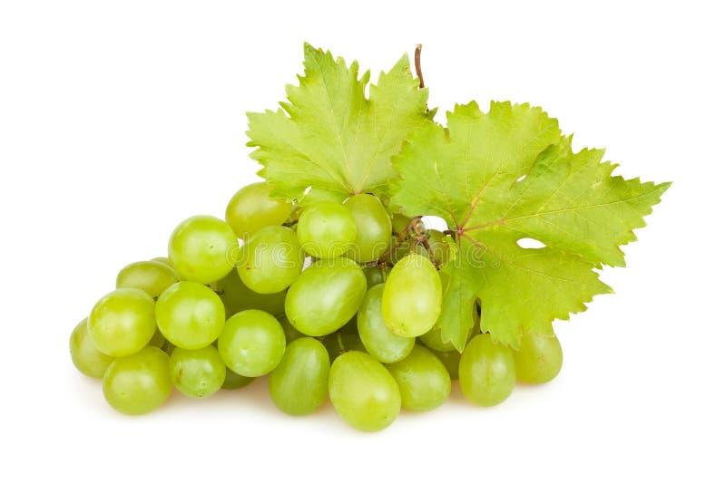 Feuille de raisins blancs photographie stock libre de droits