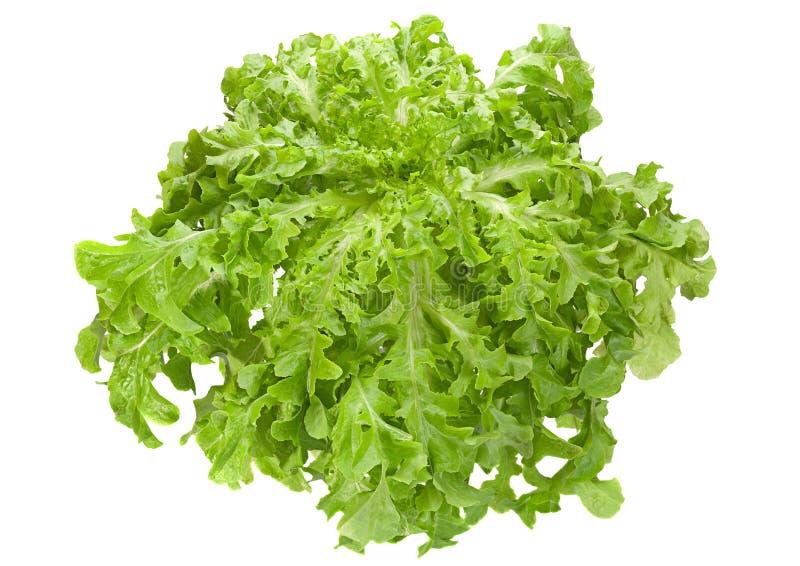 Feuille de salade de laitue photo stock