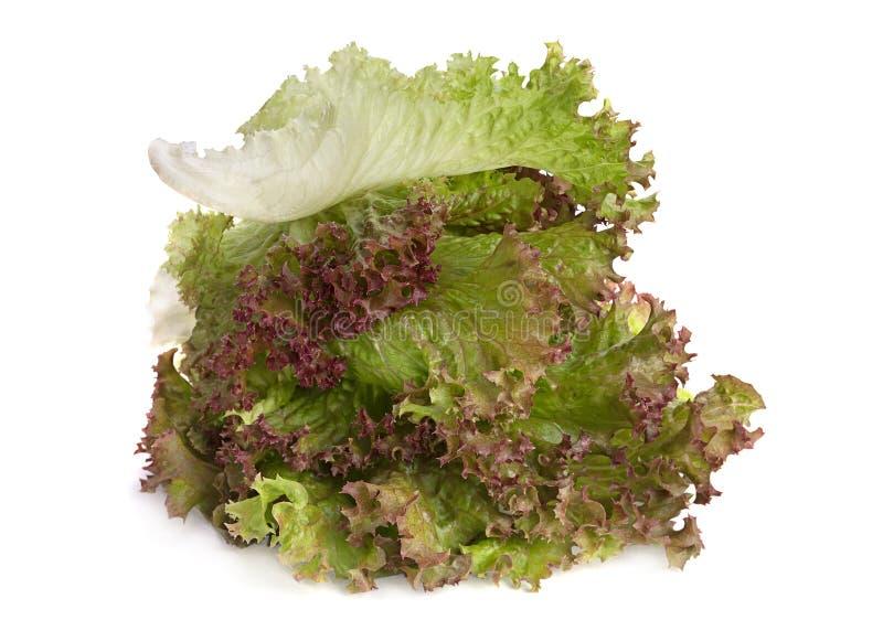 Feuille de salade de laitue image stock