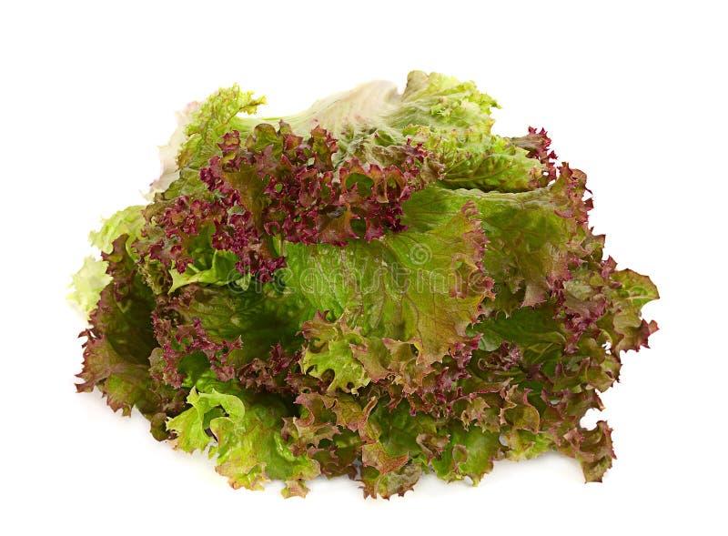 Feuille de salade de laitue image libre de droits