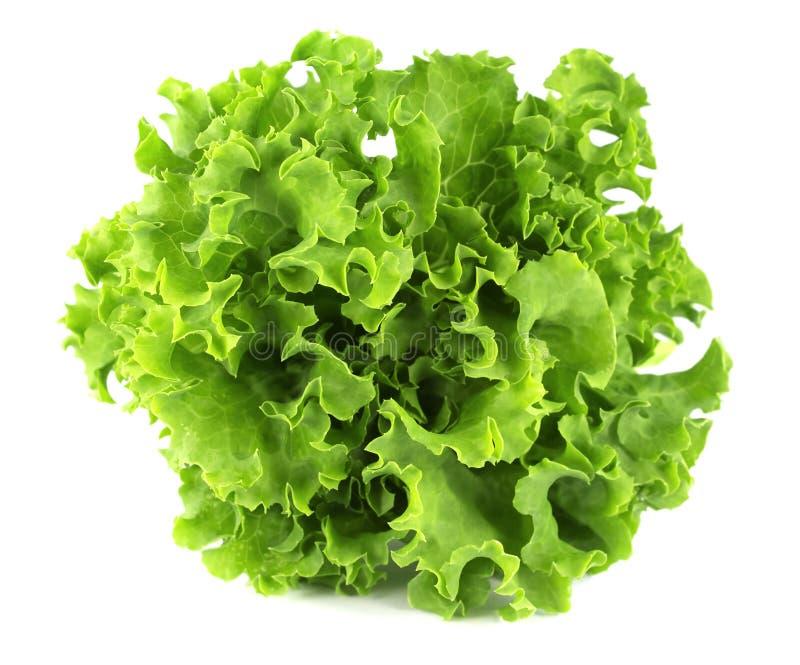 Feuille de salade Laitue d'isolement sur le fond blanc photo libre de droits