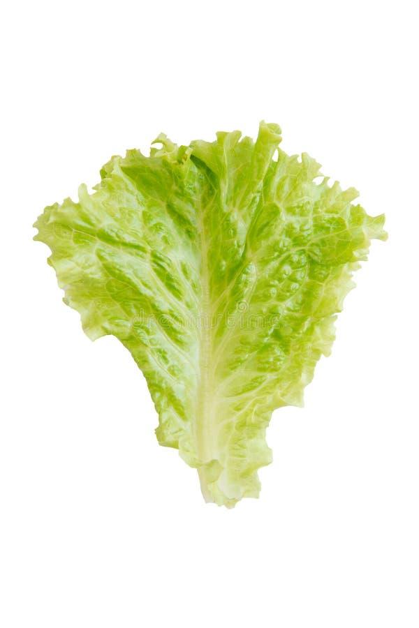 Feuille de salade Laitue d'isolement sur le fond blanc Avec le chemin de coupure photo stock