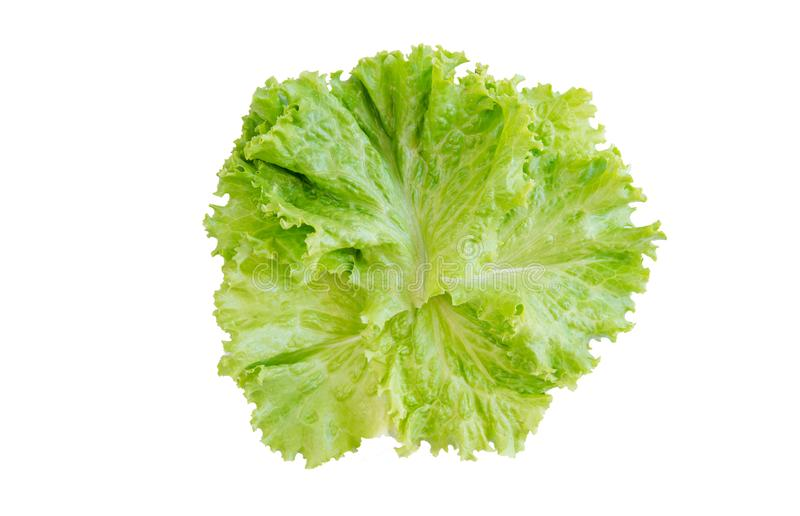 Feuille de salade Laitue d'isolement sur le fond blanc Avec le chemin de coupure images libres de droits