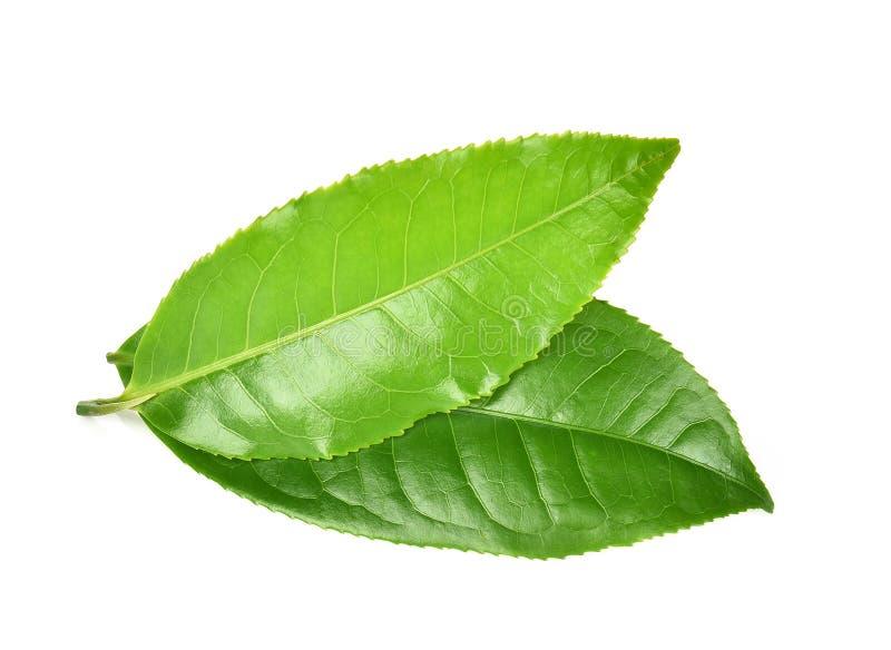 Feuille de thé verte d'isolement sur le fond blanc photo libre de droits