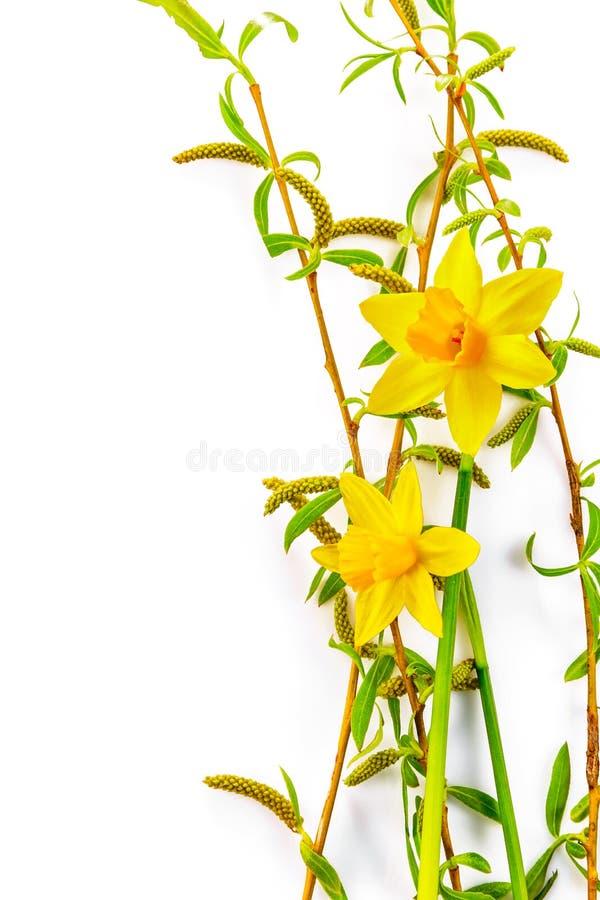 Feuille de vert de vue supérieure de narcisse de fleur de ressort images stock