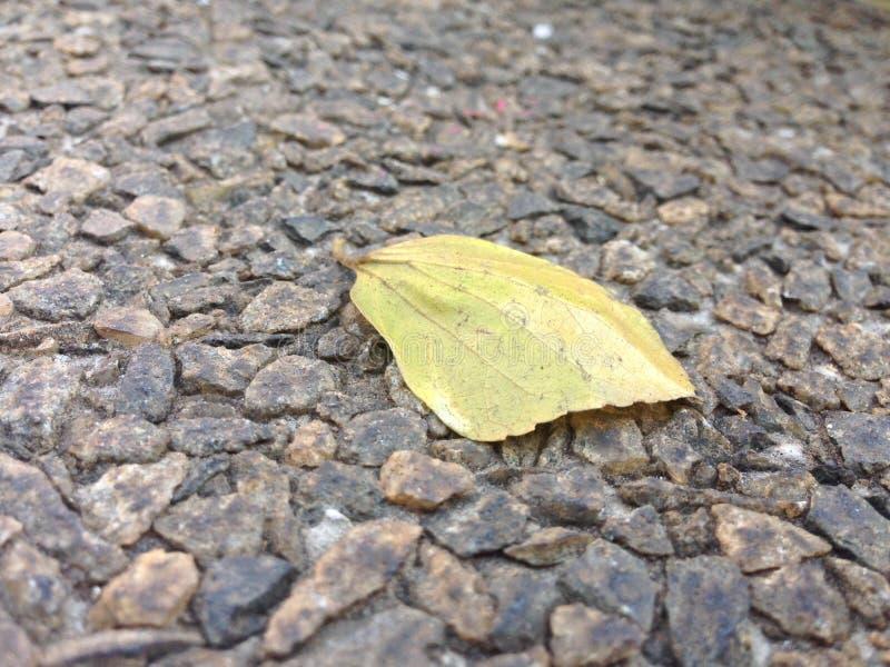 Feuille en automne photo stock