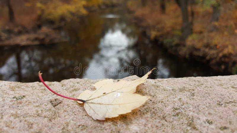 Feuille en baisse par la rivière photographie stock libre de droits