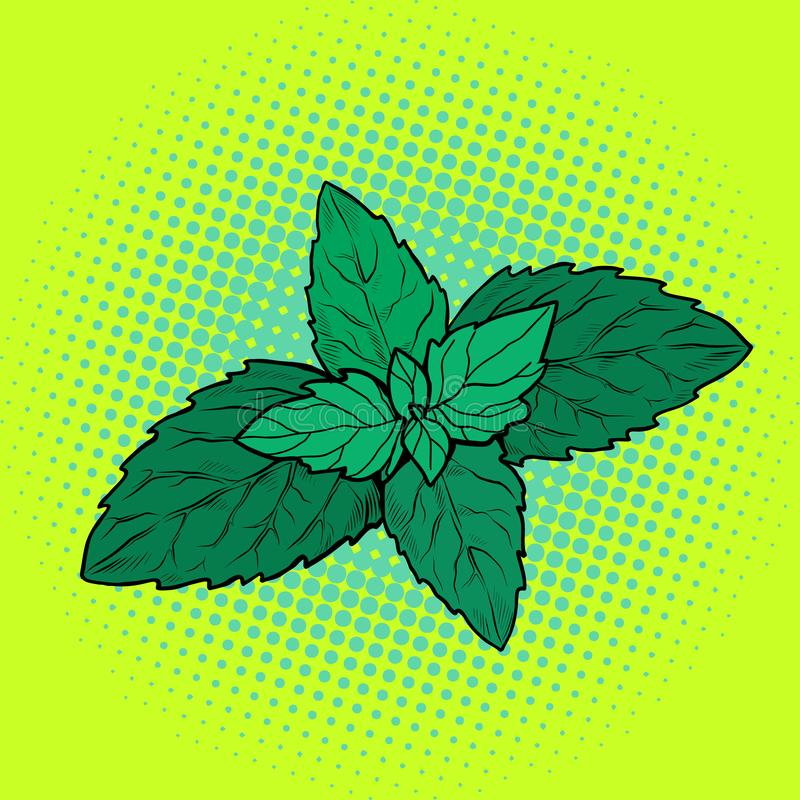 Feuille en bon état, plante aromatique illustration stock