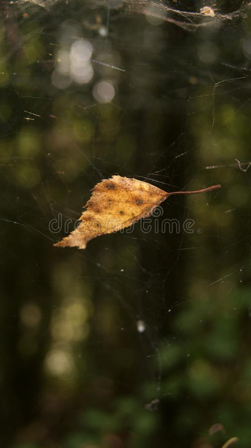 Feuille en Web photo stock