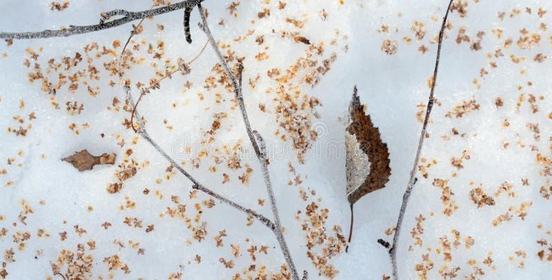 feuille et graines d 39 un arbre de bouleau dans une neige image stock image du corce blanc. Black Bedroom Furniture Sets. Home Design Ideas