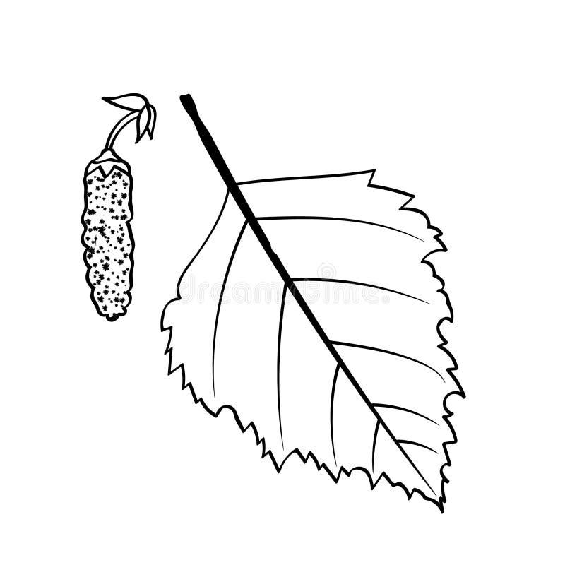 Feuille et graines de bouleau illustration libre de droits