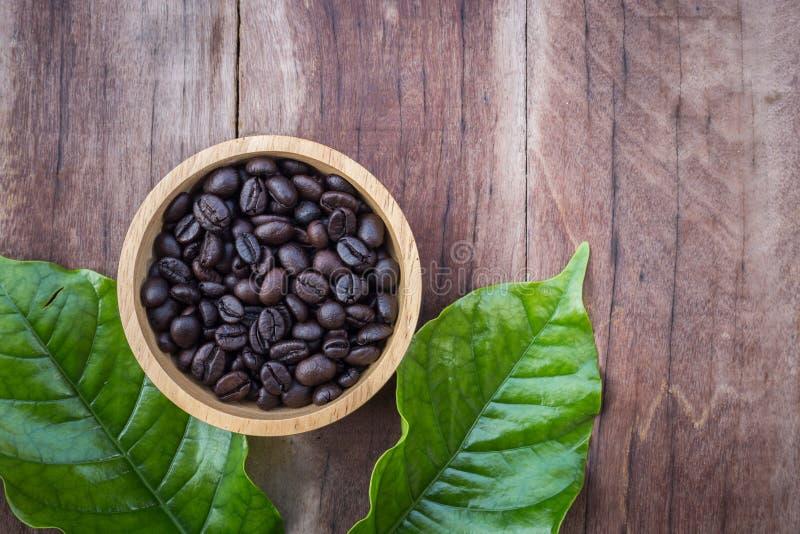 Feuille et haricots verts de caféier sur le fond en bois photo stock