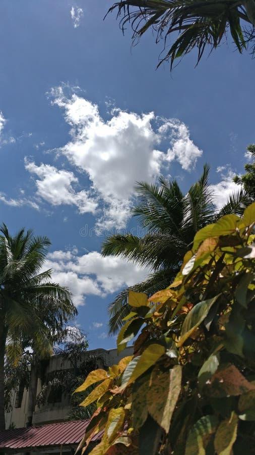 Feuille et nuages photos stock