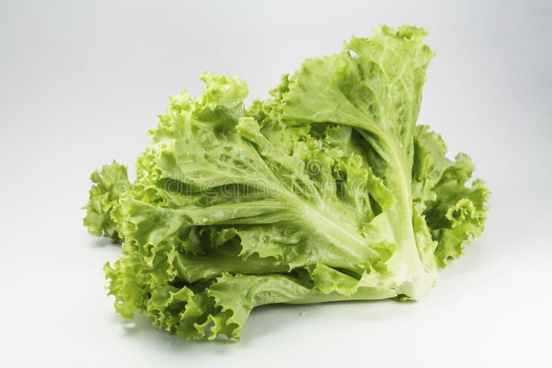 Feuille fraîche de laitue pour faire cuire la nourriture saine ou la salade végétale d'isolement sur le fond blanc, c'est bonne s photographie stock