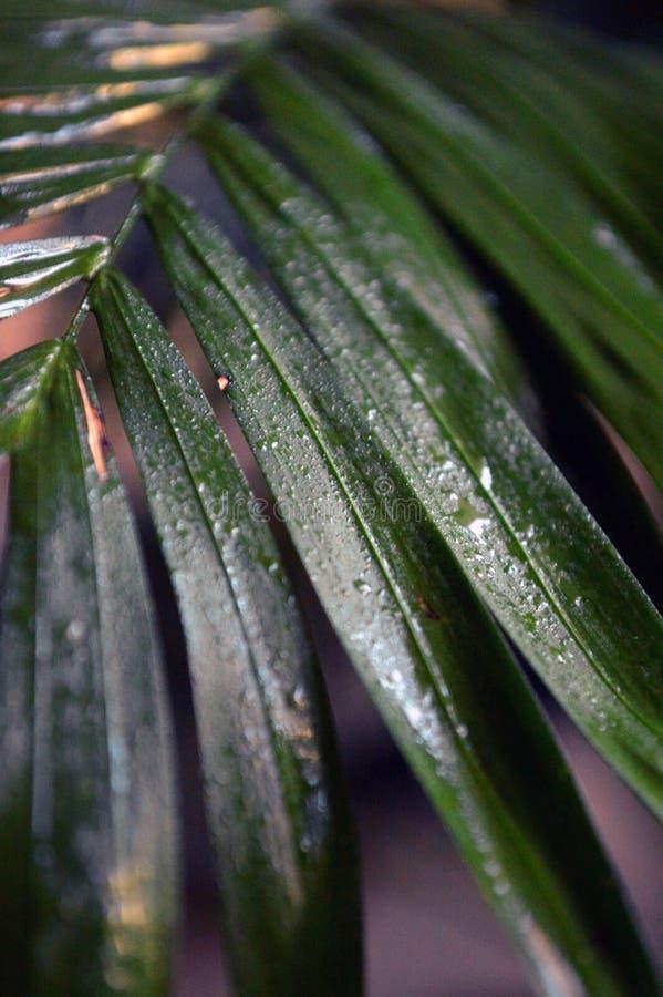 Feuille humide verte en parc image libre de droits