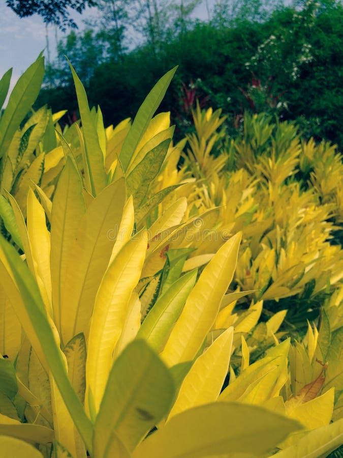 Feuille jaune dans le jardin image libre de droits