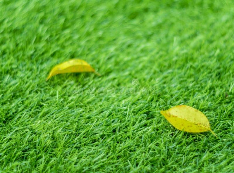 Feuille jaune de chute sur l'herbe artificielle par profondeur de fie images libres de droits