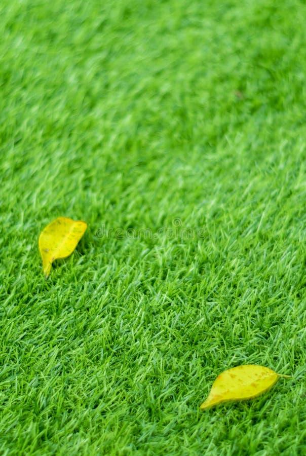 Feuille jaune de chute sur l'herbe artificielle par profondeur de fie photos libres de droits