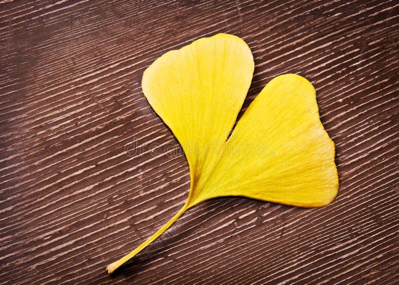 Feuille jaune en forme de coeur de biloba de ginkgo image libre de droits
