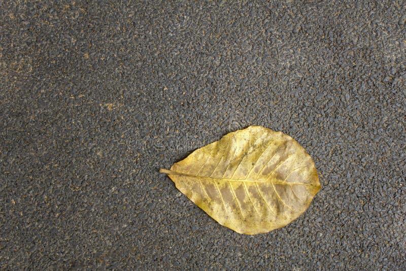 Feuille jaune sèche sur la fin grise noire d'asphalte  Texture de surface approximative photos stock
