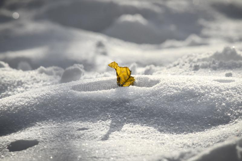 Feuille jaune solitaire dans la neige image stock