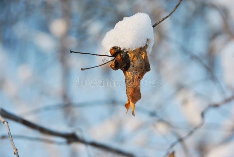 Feuille jaune superficielle par les agents et baies sèches sur la brindille couverte de neige, paysage trouble d'hiver photo libre de droits