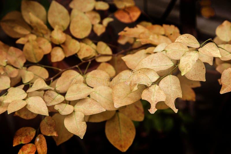 feuille jaune sur l'arbre dans la saison d'automne pour la nature images libres de droits