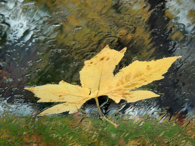 Feuille jaune sur la fenêtre de voiture pluvieuse photographie stock