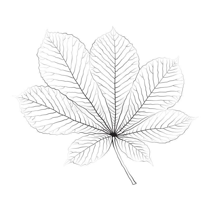 Feuille monochrome d'isolement de châtaigne de vecteur illustration stock