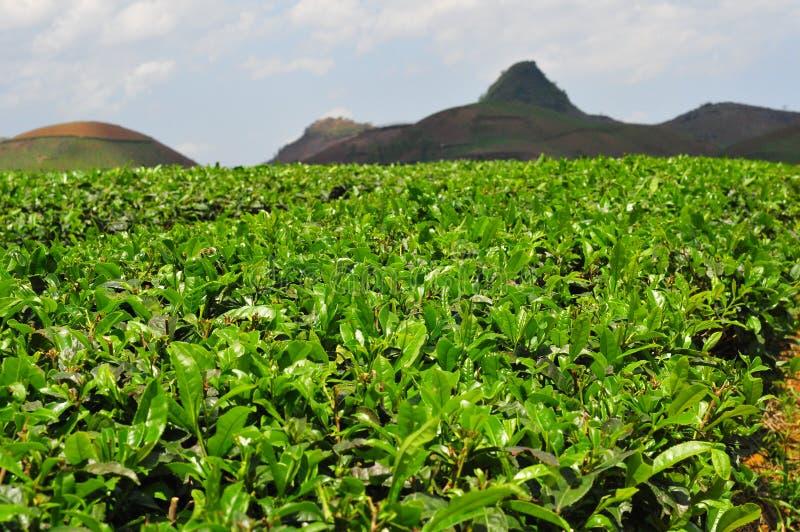 Feuille naturelle de fleur d'herbe de paysage images libres de droits