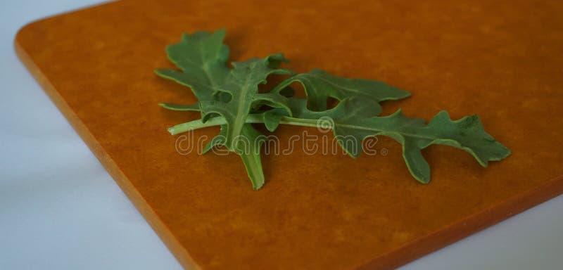 Feuille organique verte fraîche d'arugula sur le panneau dur photographie stock