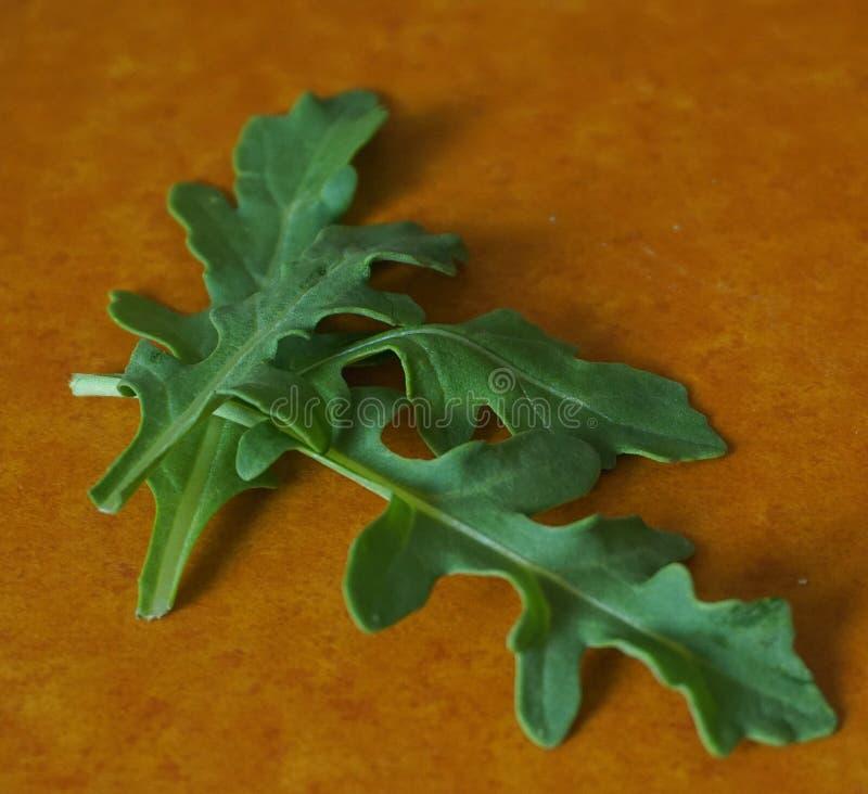 Feuille organique verte fraîche d'arugula sur le panneau dur photos stock