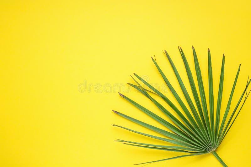 Feuille ronde en épi de palmier sur Sunny Background jaune intelligent Décoration intérieure d'usine de pièce Style génial de hip photos stock