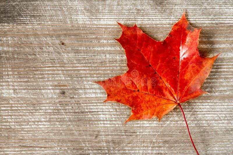Feuille rouge d'automne au-dessus de fond en bois photos libres de droits