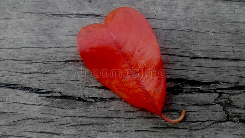 Feuille rouge en forme de coeur images stock