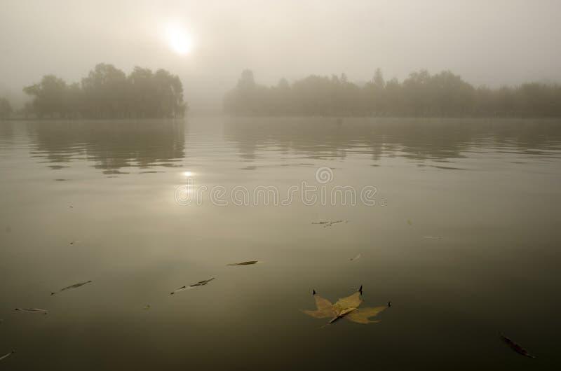 Feuille rouillée d'automne sur un miroir de lac, avec le fond brumeux, dans la lumière de matin photographie stock libre de droits