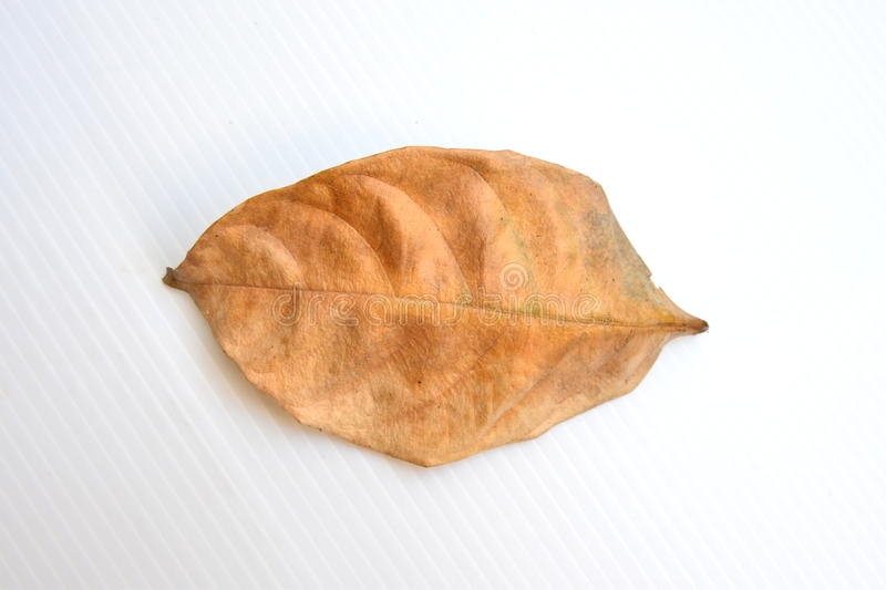 Feuille sèche image stock