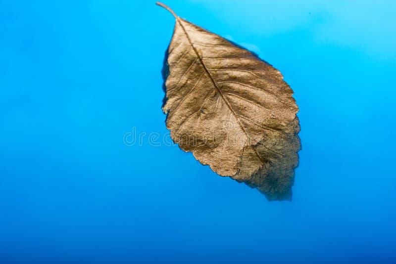 Download Feuille Sèche De Couleur D'or Placée Dans L'eau Bleue Image stock - Image du jardin, flore: 87702939