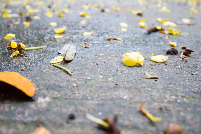 Feuille sèche et fleur tombant au sol image stock