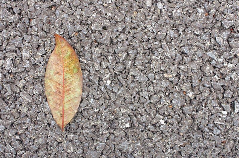 Feuille sèche sur la texture d'asphalte image libre de droits