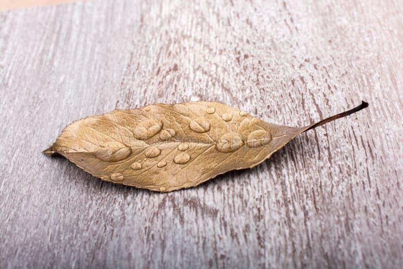 Download Feuille Sèche Sur Le Fond Brun Photo stock - Image du brun, automne: 87703380