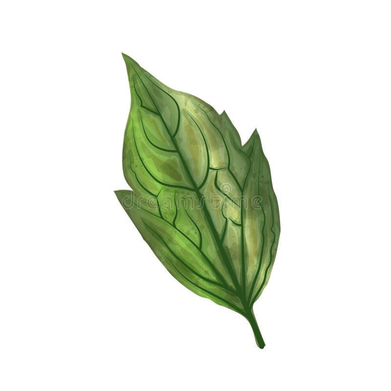 Feuille tirée par la main d'aquarelle d'isolement sur le fond blanc, numérique illustration stock