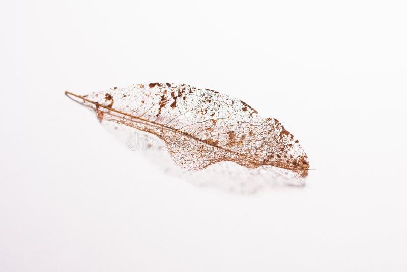 Feuille tombée après un long hiver image stock