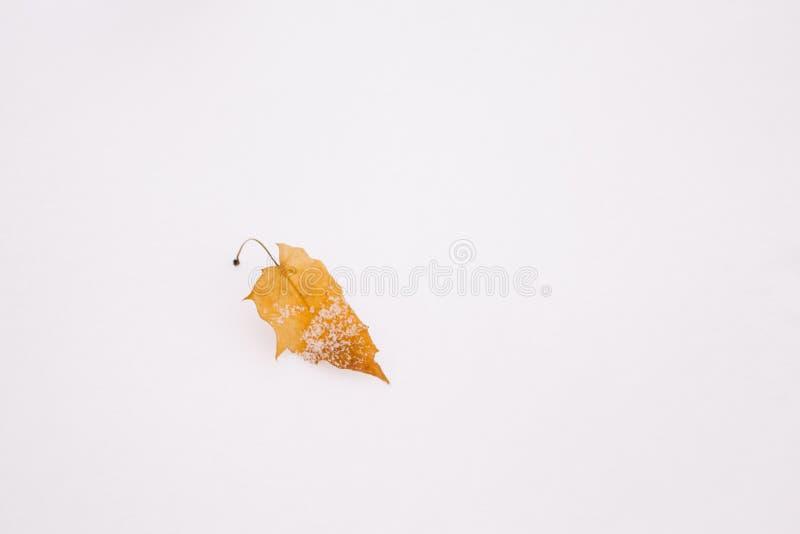 Feuille tombée par jaune sur la neige Fond d'automne ou d'hiver avec l'espace de copie photo libre de droits