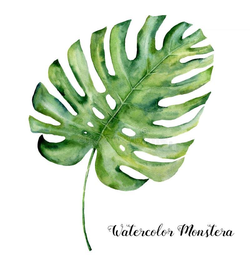 Feuille tropicale d'aquarelle de monstera Usine tropicale à feuilles persistantes peinte à la main d'isolement sur le fond blanc  illustration libre de droits