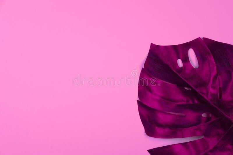 Feuille tropicale rouge de monstera images stock