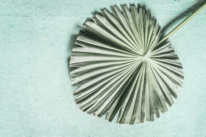 Feuille tropicale verte en pastel de paume de fan images stock
