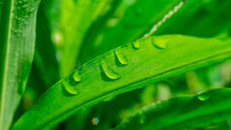 Feuille verte avec la baisse de bulle sur des feuilles photos libres de droits