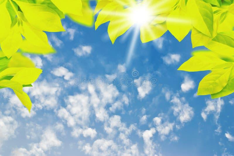 Feuille verte avec le nuage blanc et le ciel bleu pour la conception photographie stock